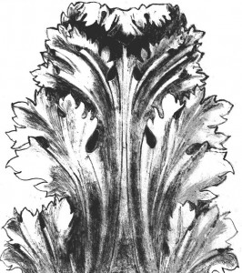 dessin de feuille d'acanthe